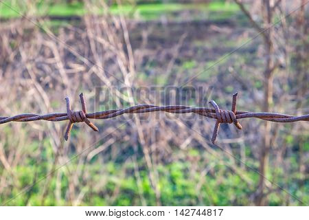 Old barbed rusty wire on a dry grass background