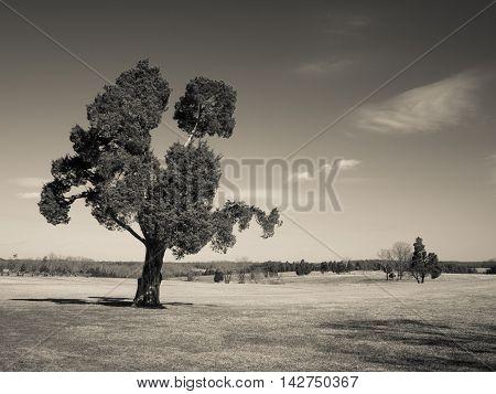 Old tree on the Manassas Battlefield in Virginia