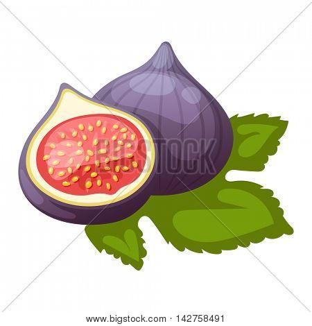 Figs fruits vector.