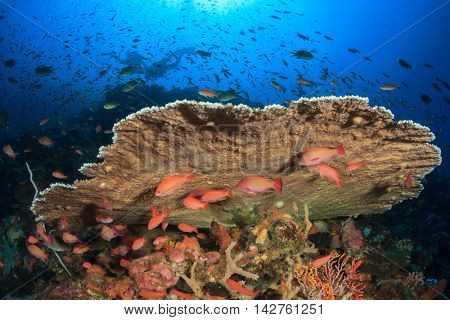 Coral reef and fish. Underwater ocean landscape. Scuba diving.
