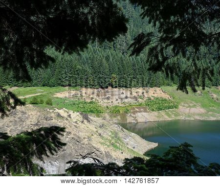 The stump covered shores of the lake are seen through the bows of pine trees in Oregon.