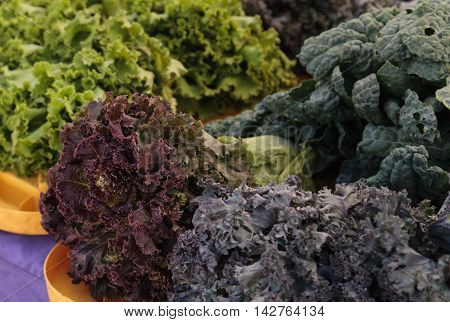Purple and green romaine lettuce and kale grown and harvested in Southern California and displayed at a farmers market.