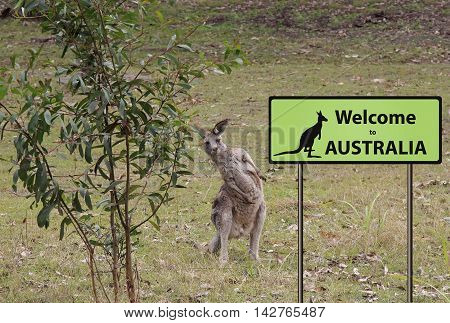 welome to Australia sign with kangaroo in the background