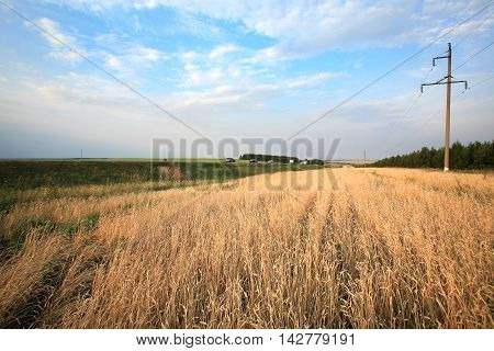 Summer In A Field