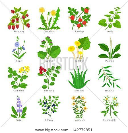 Aromatherapy medical herbs and flowers hand drawn vector on white