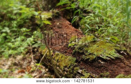 Photograph of a mossy log in the woods.