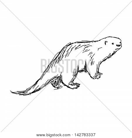 illustration vector hand drawn sketch of African Clawless Otter isolated on white background
