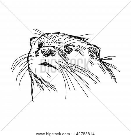 illustration vector hand drawn sketch of closeup African Clawless Otter isolated on white background