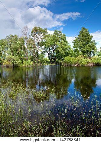 Oak Grove Near The River
