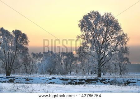 Sunset Over The Forest In Frost