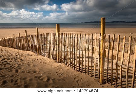 Stabilizing dunes by planting grass on Swansea Bay.