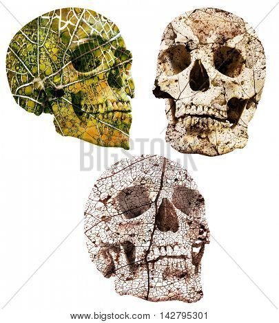 abstract green skull isolated on white background