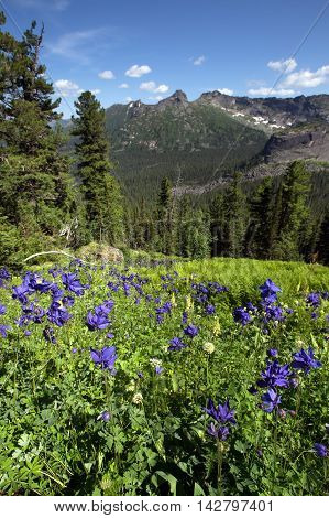 Delphinium Flower In The Mountains