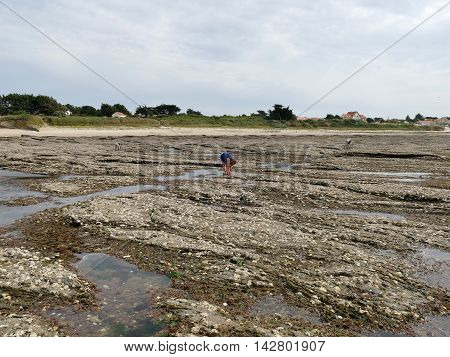 Unrecognizable People Collecting Oysters On French Coastline