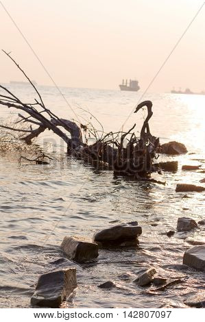 beach driftwood and ships against the setting sun. in the photo are not the usual perspective selective focus