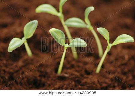 Nuevo concepto de vida - las plántulas que crecen en el suelo