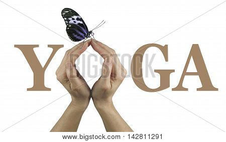 Offering You Yoga - Female using both hands to make an O in the word YOGA isolated on a white background with a closed wing resting butterfly perched delicately on the top of her fingertips
