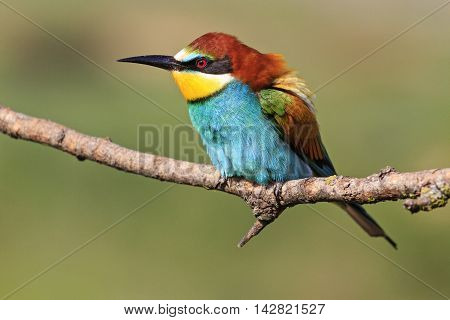 colorful bird on a branch, birds of paradise, European fauna, birds and bees