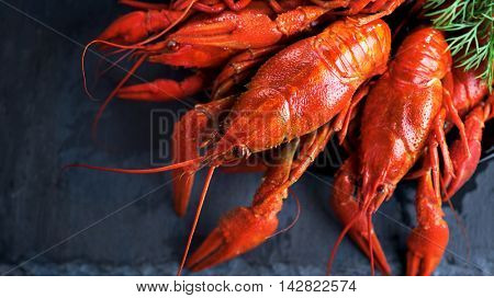 Crayfish, Crawfish closeup .Red boiled crayfish with herbs on stone slate dark background. Lobster closeup