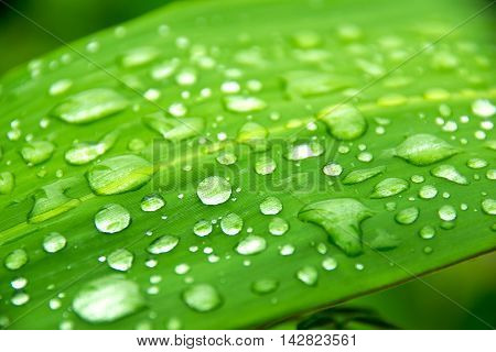 Close up water rain drop on green leaf for nature texture background