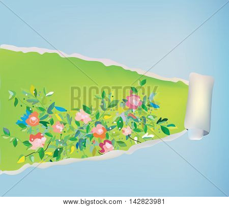Paper scroll background with flowers - abstract frame vector graphic illustration