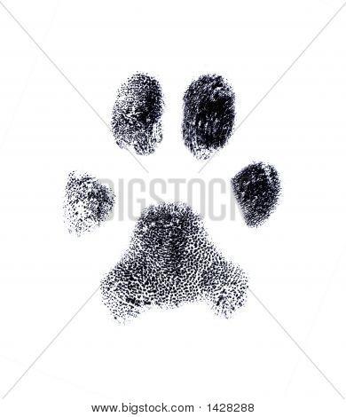 Impressão digital de cão