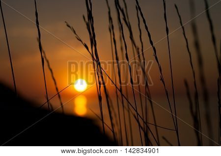 spikelets of grass in evening sunset sea