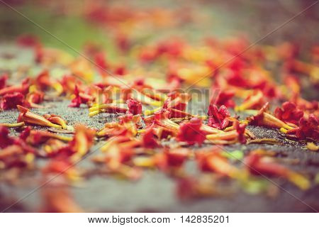 Beautiful Natural Background With Orange Flowers On The Ground In The Rain