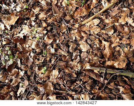Fallen leaves background with great contrast taken from above