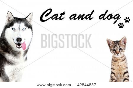 Cute dog and adorable kitten on white background. Space for text.