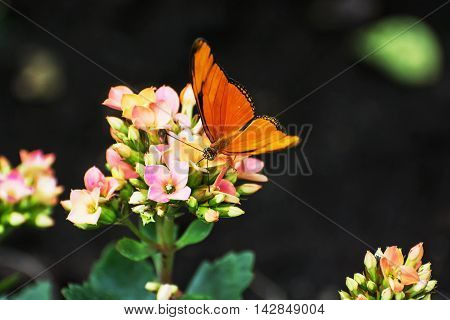 Beautiful orange butterfly pollinating small pink and yellow flowers. Fauna and flora. Seasonal natural scene. Beauty in nature. Vibrant color.