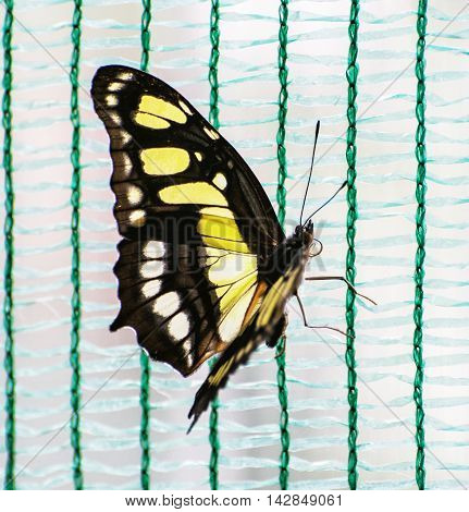 Close up photo of yellow butterfly. Beauty in nature. Seasonal natural scene.