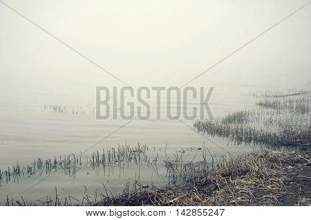 Swamp with fog