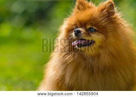 Portrait of small and hairy dog in bright daylight