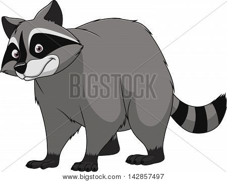 Vector illustration adult funny raccoon smiling on a white background