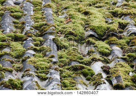 texture of the old roof. moss and slate