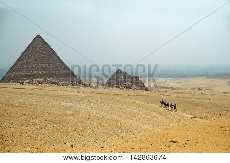 caravan of camels on the background of the pyramids at Giza. Egypt. September 2008.