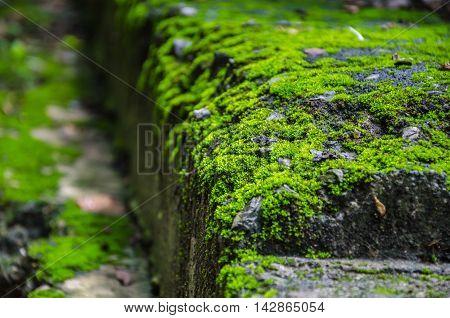 beautiful mossy brick beside path way in rainny day near the ocean