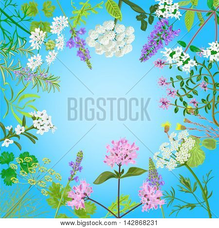 Vector card with herbal flowers. Salvia angelica oregano rosemary savory verbena anise fennel coltsfoot marjoram flowers Vector illustration
