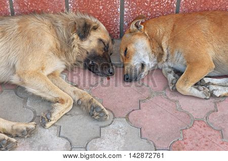View of two homeless dogs lying head-by-head on pavement.