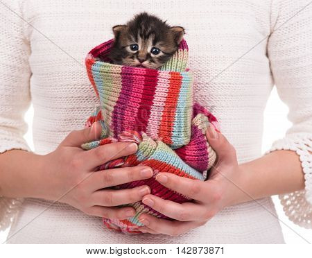 Cute fluffy kitten in the red scarf on female hands over white background