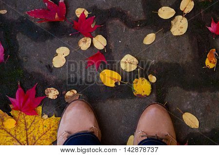 Someones legs on fall road with fallen colorful leaves, close up top view