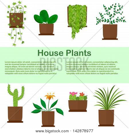 Potted plants in flat style. Houseplants template. Isolated on white background. Place for text. Vector illustration.