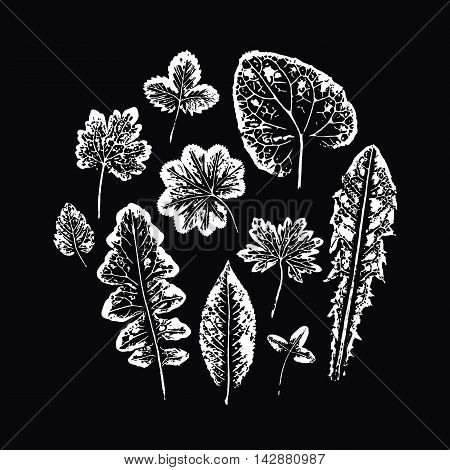 Collection of white leaves imprints on black background