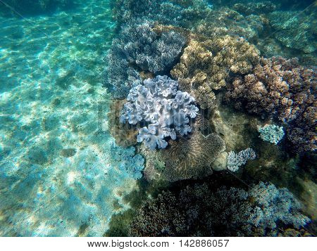 Snorkeling near tropical island - underwater view with sea bottom sand and coral reef. Philippines exotic nature underwater. Marine landscape with sea plants. Banner or card template with text place.