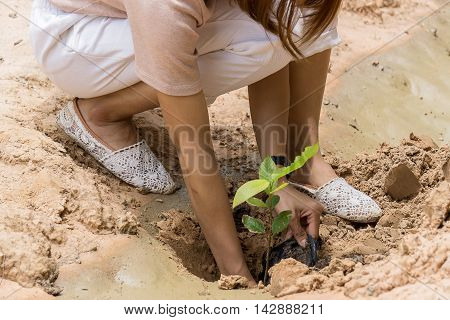 People are planting trees . Afforest. Save the forest.