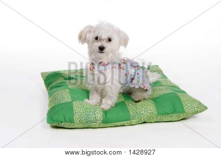 Puppy_Pillow