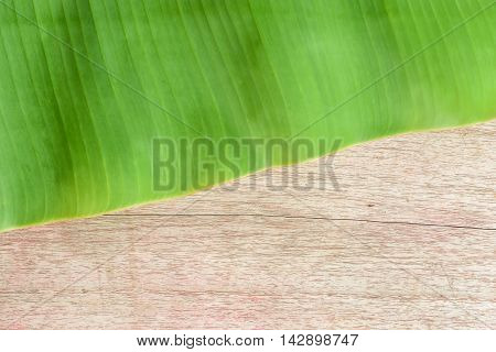 green banana leaf on wodden texture and detail abstract background with copy space