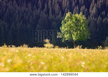 single tree in front of forest and meadow grass and flowers at autumn