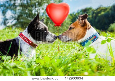 Couple Of Dogs In Love
